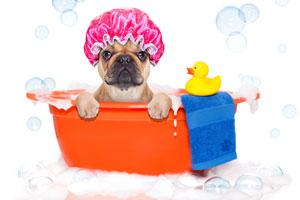 Come fare il bagno al cane