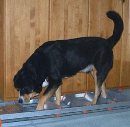 cane con scala