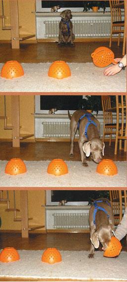 cane gioca scova premio