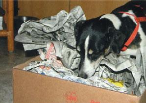 cane gioca scova tra i giornali