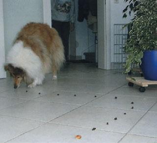 cane gioca pista croccantini