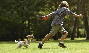 lancio della pallina al cane