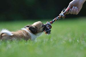 tiro alla fune col cane