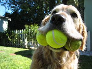 no ai giochi in area cani