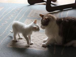 arriva il secondo gatto in casa