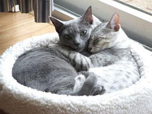 come accogliere in casa il secondo gatto