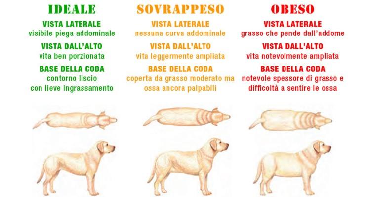 Cani In Sovrappeso E Obesi