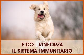 sistema immunitario fido