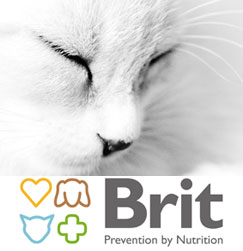 149582brit-care-gatto